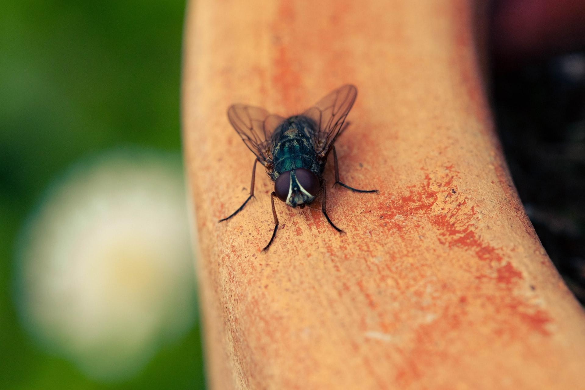 İBB'den İstanbullulara uyarı mesajı! Bu tavsiyelere uymazsanız sivrisineklerle başınız büyük dertte!