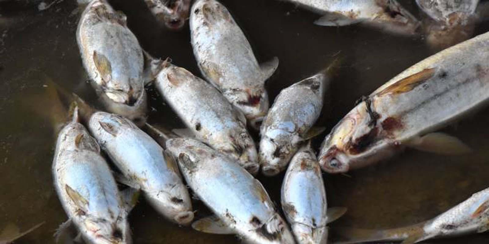 Alibeyköy Barajı'nda korkutan görüntüler! Ölü balıklar kıyıya vurdu
