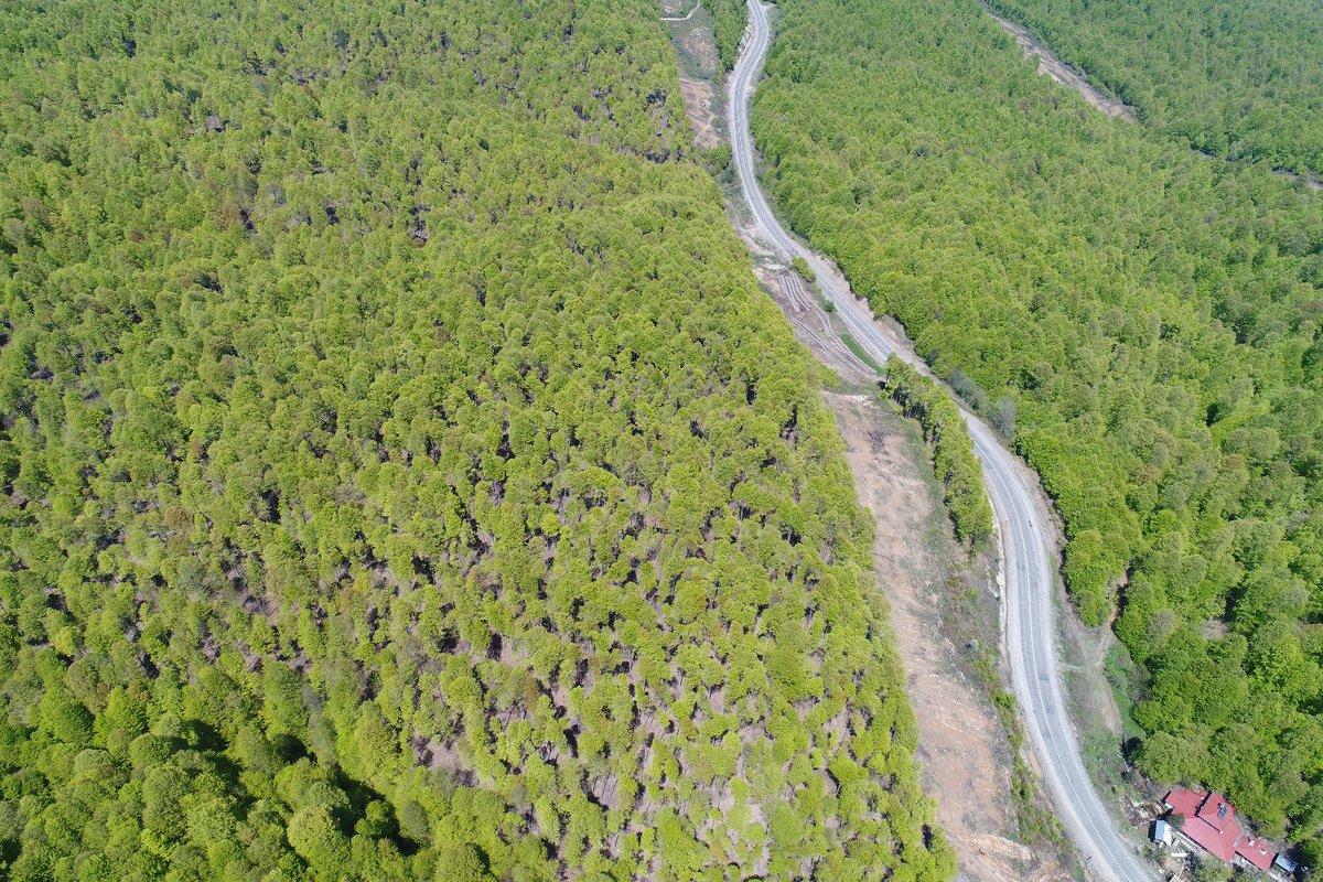Odun toplamak için ormana gitti bir daha haber alınmadı! Gülefer Boynukısadan 3 gündür iz yok