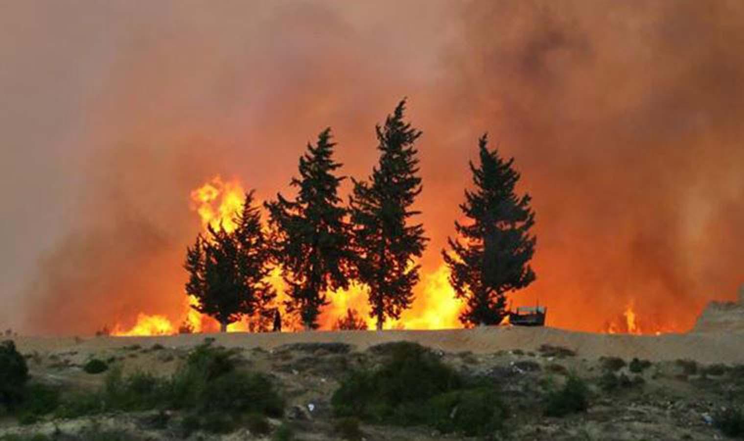 Hangi illerde orman yangını var? | Hangi illerde yangın oldu? Yangınlar neden çıktı?