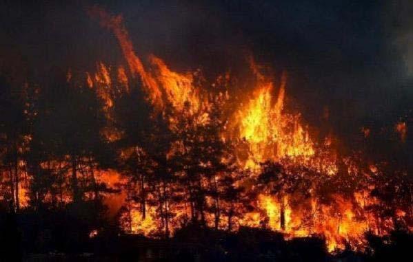 Felaket Karadeniz'e de sıçradı! Samsun'un Vezirköprü ilçesindeki ormanlık alanda yangın çıktı