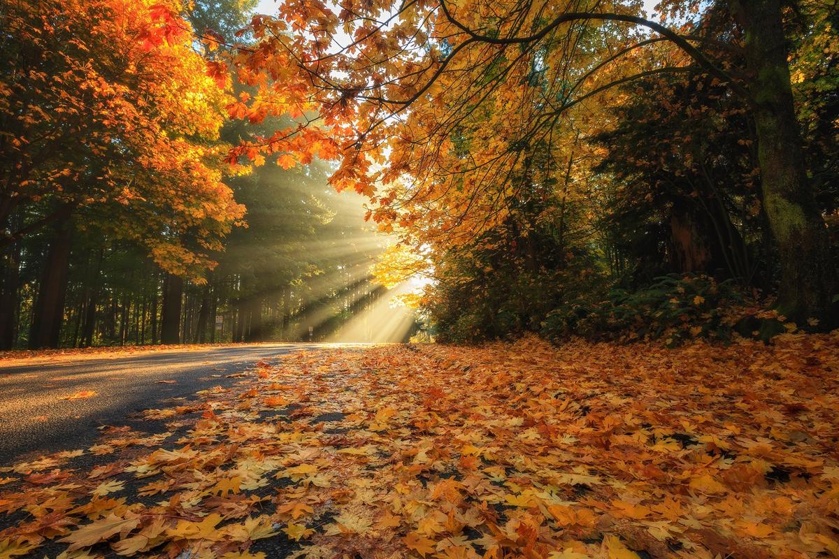 Sonbahar Ekinoksu nedir, ne zaman 2021? Sonbahar mevsimi özellikleri, ayları nelerdir? Gece gündüzeşitliği nedir, ne zaman?