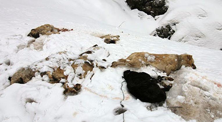 Konya'da köpek katliamı! 7 köpek ayakları bağlı halde ölü bulundu