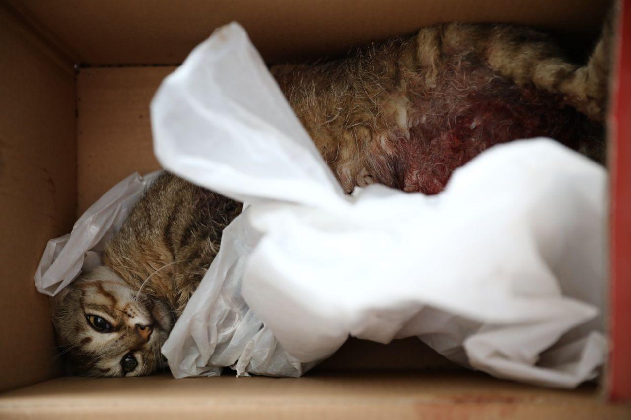 Bunun adı başka bir şey! Hamile kediyi pitbull cinsi köpeğe öldürttüler