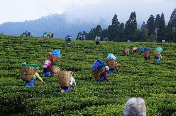Kuru çay zammı ne kadar 2019? Çaykur kuru çay zammı son durum 2019 nedir?