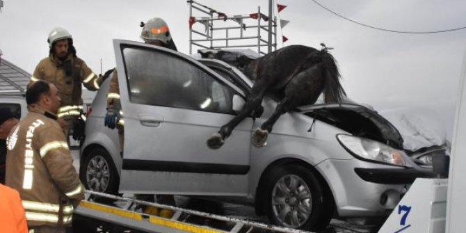 Başıboş at otomobilin ön camından içeri girdi! Görenler hayrete düştü