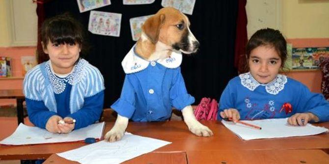 Maskot köpek Fındık'ın öğrencilik hayatı büyük ilgi gördü