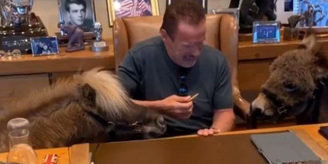 Arnold Schwarzenegger eşeğiyle ofisine geldi! Görenler şaştı kaldı