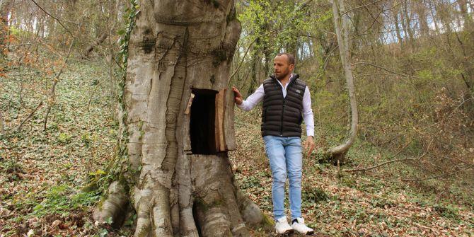 Koronavirüsten korunmak için asırlık ağaca yaptığı davranış büyük tepki çekti!