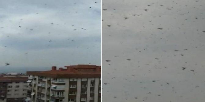 İzmir'deki böcek kalabalığı görenleri korkuttu!