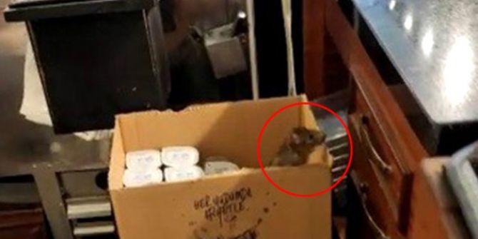 Denizli'nin ünlü tatlıcısından fare çıktı! Sosyal medya karıştı