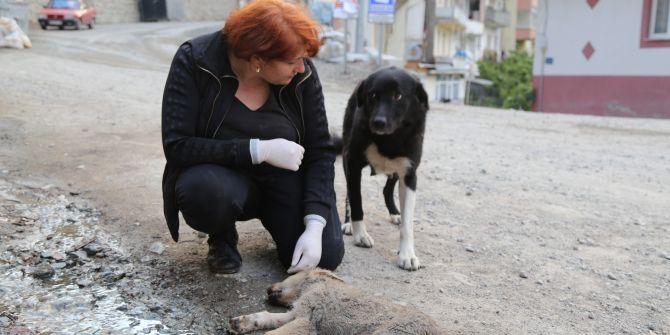 Dişi köpeğin annelik duygusu yürekleri dağladı! Ölen yavrusunun yanından ayrılmadı