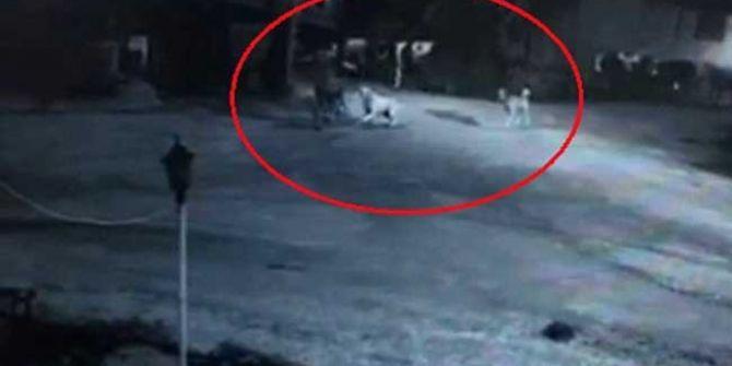 5 köpeğin saldırısına uğrayan yaşlı adam canının zor kurtardı!