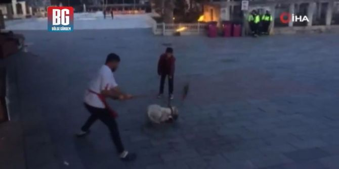 Eyüpsultan'da pitbull dehşeti! Yakaladığı kediyi paramparça etti